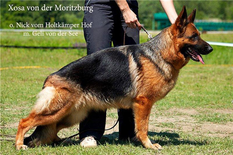 Xosa von der Moritzburg