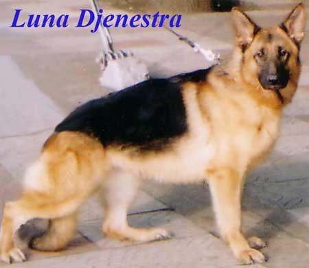 Luna Djenestra