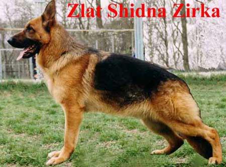 Zlat Shidna Zirka
